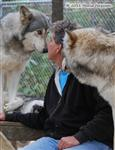 Wolf pictures, part of the pack I Picture