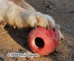 Wolf paw picture VII Picture