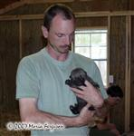Wolf Pup and bottle feeder picture Picture