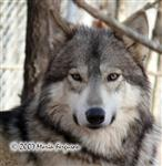 Lone Wolf Waya, picture Picture