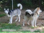 Part of the pack Picture