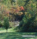 Preserve's Bridge in the Fall photo Picture