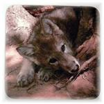 View details for this Wolf Pup Magnet - Nita
