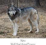 View details for this Wolf T Shirt, Nita - XXXL