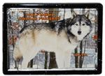 View details for this Wolf Framed Easel Magnet - Waya