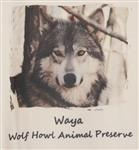 View details for this Waya Child's Wolf T Shirt - CXS