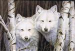 View details for this White Wolves Magnet