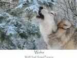 View details for this Wolf Howl T Shirt, Woha - XXL
