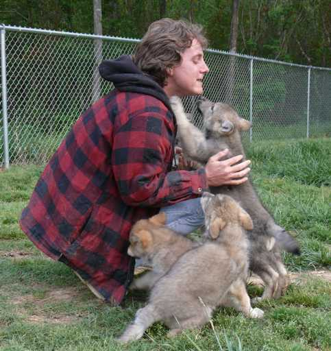 A wolf pup greeting photo