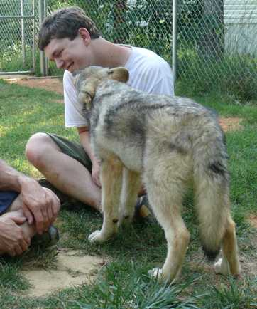 Wolf pup kisses picture