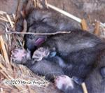 Wolf Pup dreams picture Picture