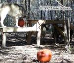 Wolves have pumpkin fest Picture