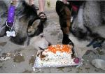 Nala & Haley sharing Birthday Cake Picture