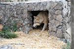Wolf Pictures, the cave Picture