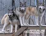 Daddy's Girls, Wolf picture Picture