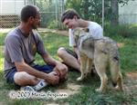 Wolf pup gives kisses picture Picture