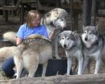 Wolf pictures, Wolves in a row Picture