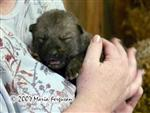 Wolf Cub Pictures, Our Nita Picture