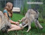 wolf pictures, visiting nanny Picture