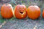 Here Comes the Pumpkins Picture