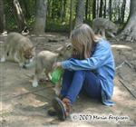 Love at first sight, wolf pup picture Picture