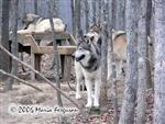 The Wolf Pack picture Picture