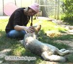 Wolf pups and friend picture Picture