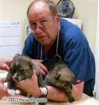 Wolf pups first visit to Dr. Harland