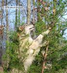 Wolf pictures, reach for it Picture