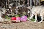 Wolves birthday party picture