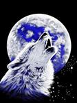 View details for this Howling Wolf King Size Blanket