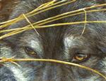 View details for this Wolf Eyes Puzzle