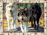 Wolf Pack Colors Puzzle
