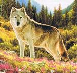 Wolf and Nature Birthday Card