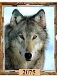 View the Lone Wolf Picture