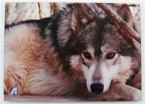 Metal Wolf photo magnet