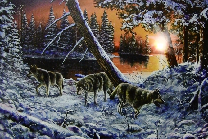 wolf-led-canvas-2.jpg