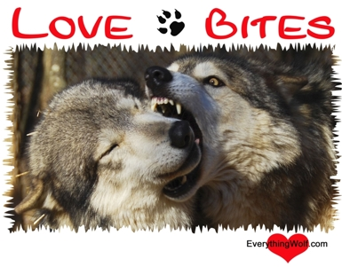 love-bites-long-sleeve-wolf-t-shirt-3.jpg